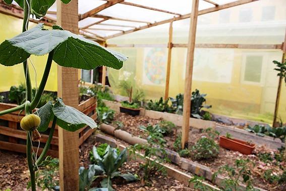 Orto biologico irrigato con acqua piovana