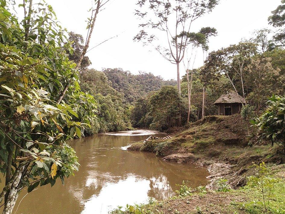 Foresta amazzonica Ecuador